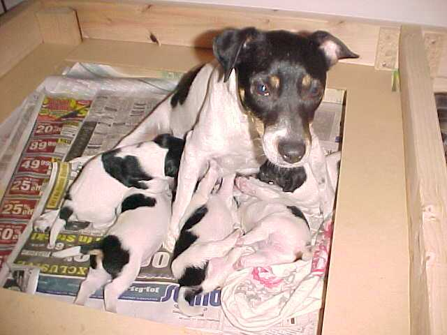 Maddy's litter week2