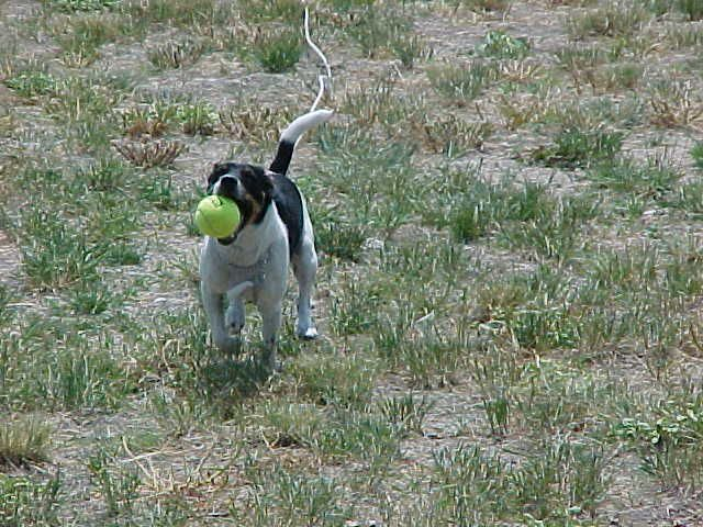 Fetch ball