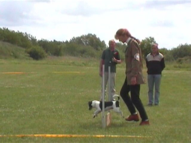 Maddy obedience jump