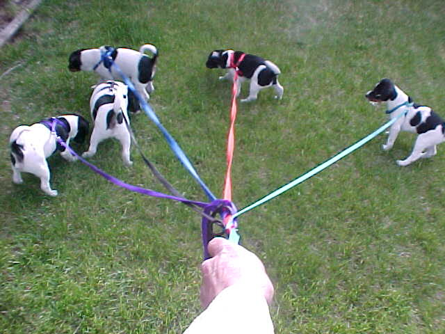 All pups on leash